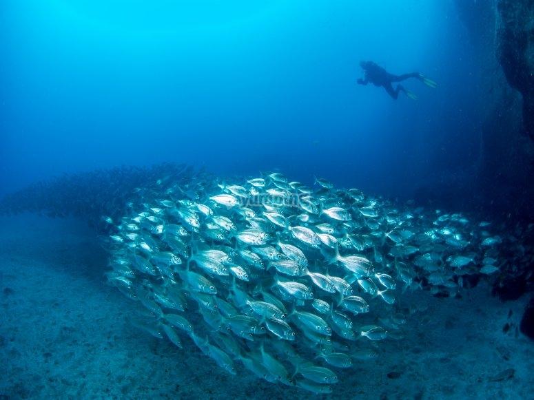 Inmersión en mar abierto curso PADI