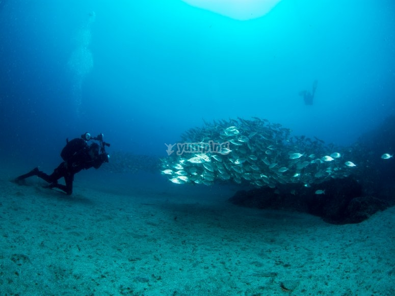 Buceando entre bancos de peces