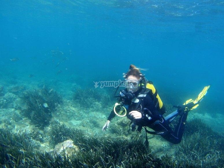 Buceando entre vegetación marina