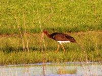 ave en las orillas de un lago