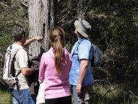 three people watching a tree