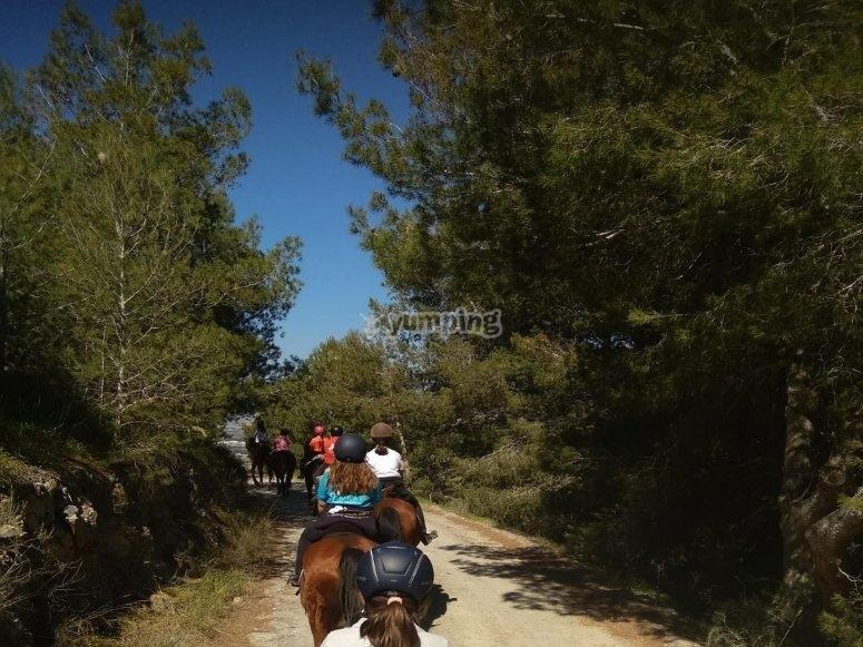 Paseo a caballo por caminos rurales Motril