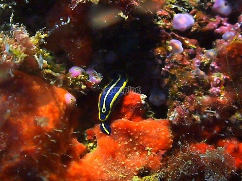 丰富多样海洋动物