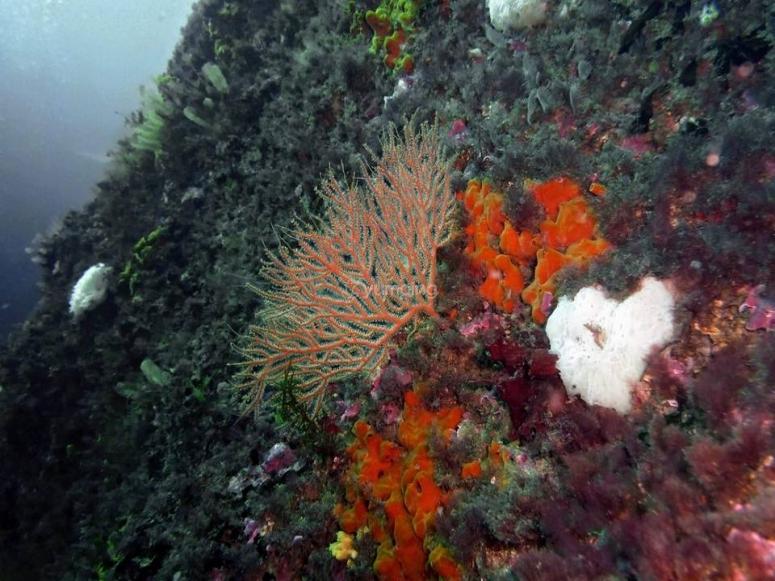 在坎塔布连海的底部探查