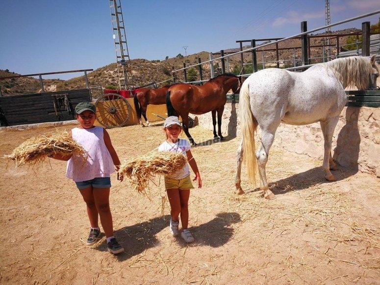喂马的女孩