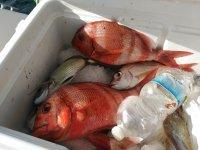 Botin de pesca