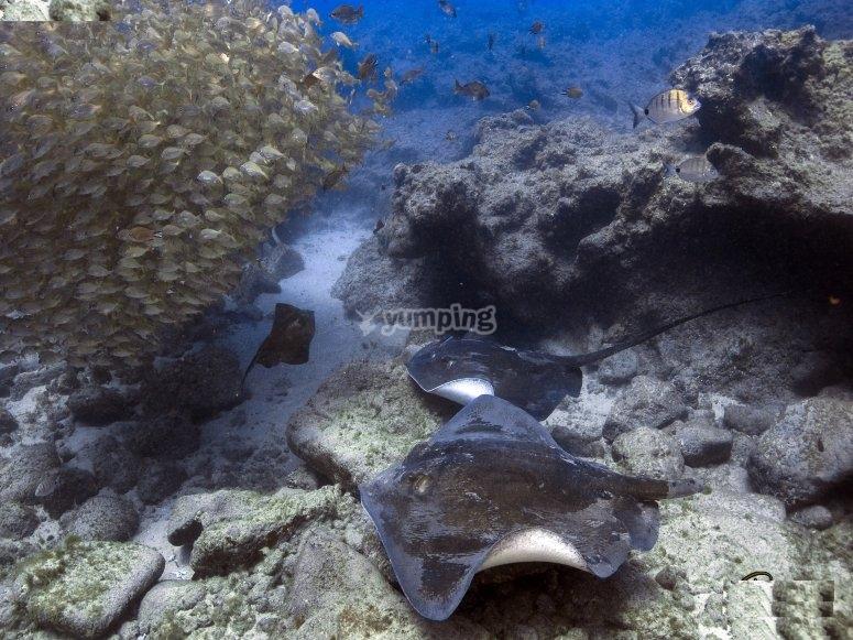6 inmersiones de buceo en Las Galletas