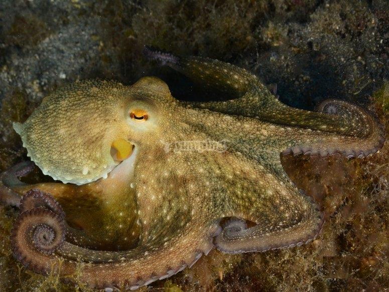 Buceo entre especies marinas Tenerife