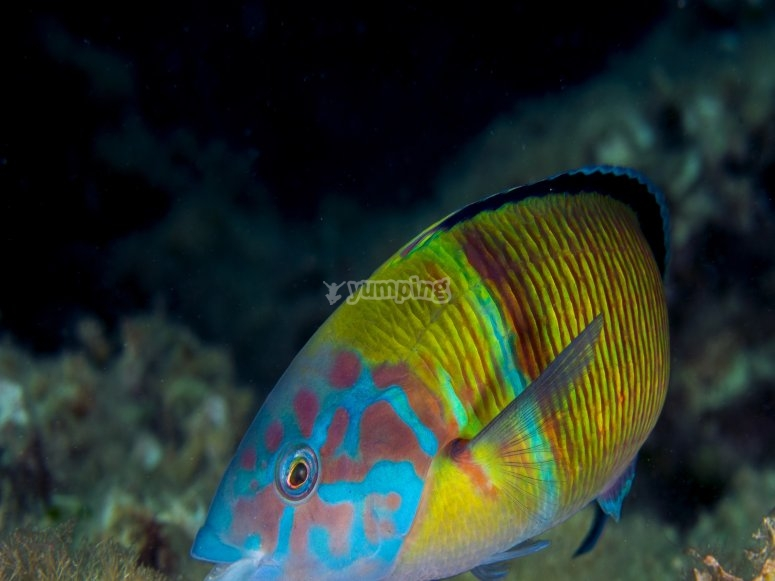 Variedad de peces en Tenerife buceo