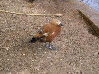 Vista de un ave en el corral