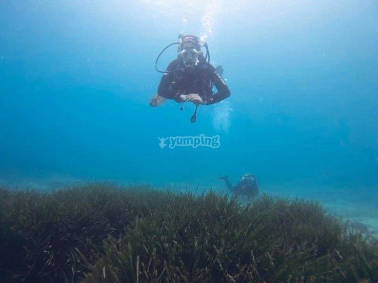 在帕拉莫斯的植被中潜水