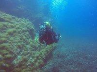 Buceo en las aguas de la Costa Brava