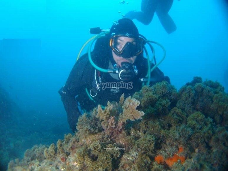 内尔哈潜水课程