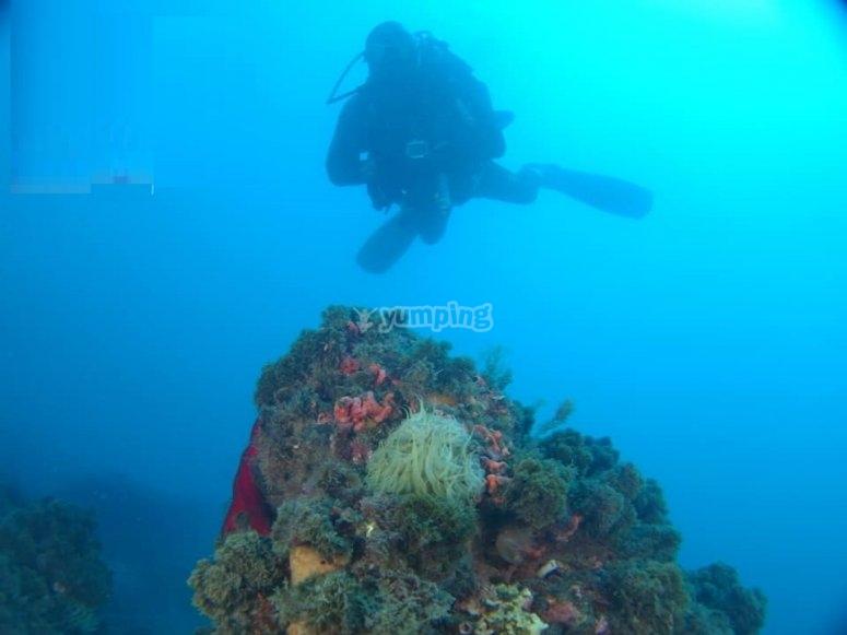 高级开放水域潜水员课程内尔哈