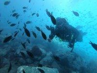 Burriana海滩深处的潜水日