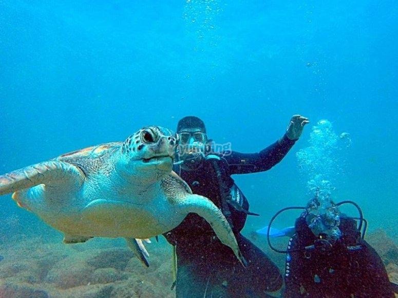 Baustimo de buceo en Tenerife