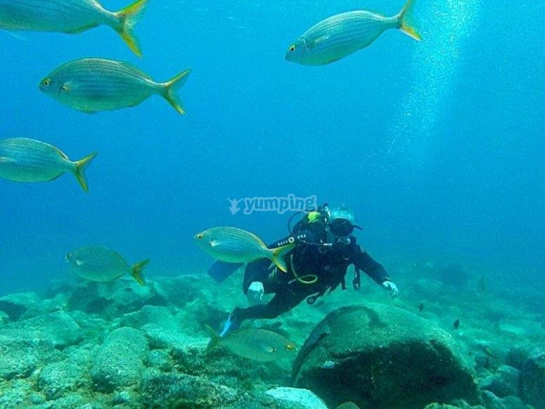 Buceando entre peces Puerto de la Cruz