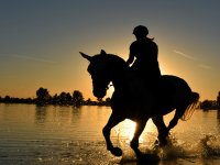 Horseback riding along Torremolinos beach
