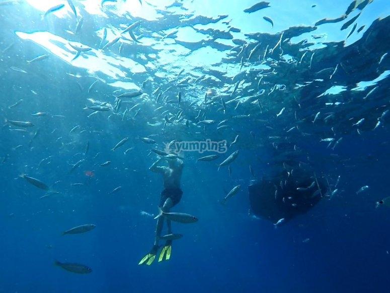 Salida en barco y snorkel en Maspalomas