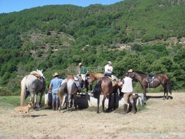 Paseo a caballo Valle del Tiétar