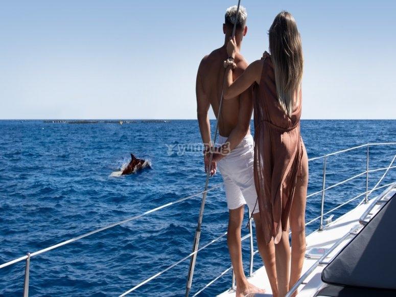 Tour en catamarán avistar cetáceos Adeje