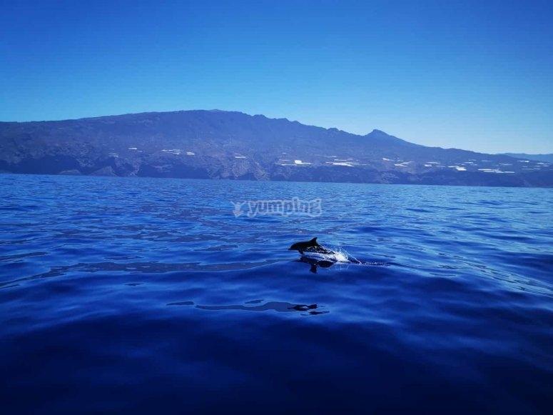 与海豚一起乘船游览拉帕尔玛岛