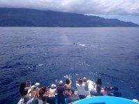 赏鲸在拉帕尔玛岛