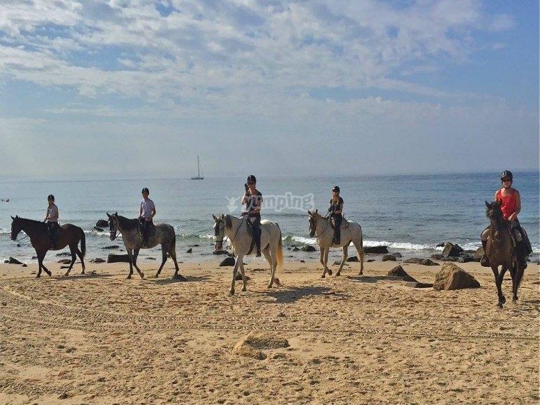 博洛尼亚海滩的马术出口