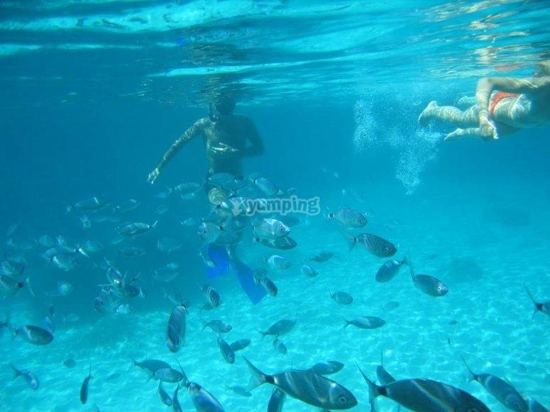 Banco de peces en Formentera