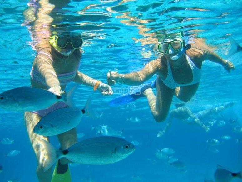 Bancos de peces y Snorkel