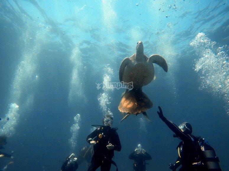Buceando por los fondos marinos tinerfeños