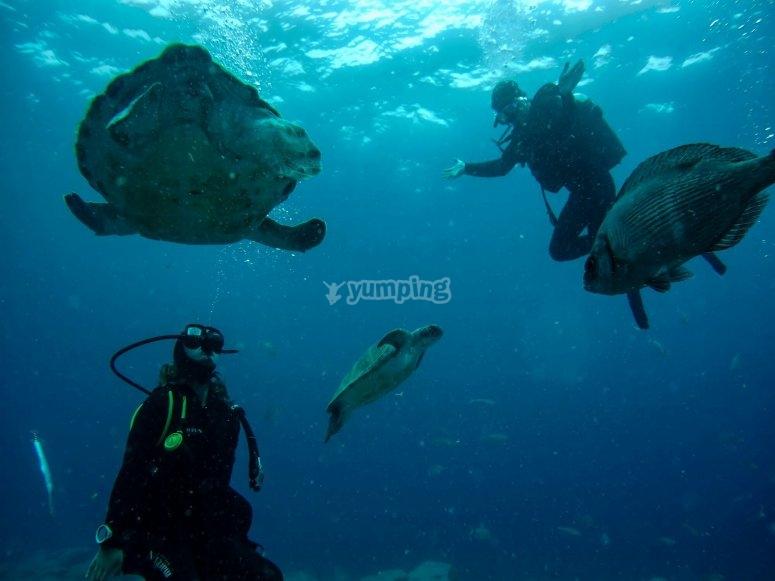 在阿德赫海岸与海龟的深处