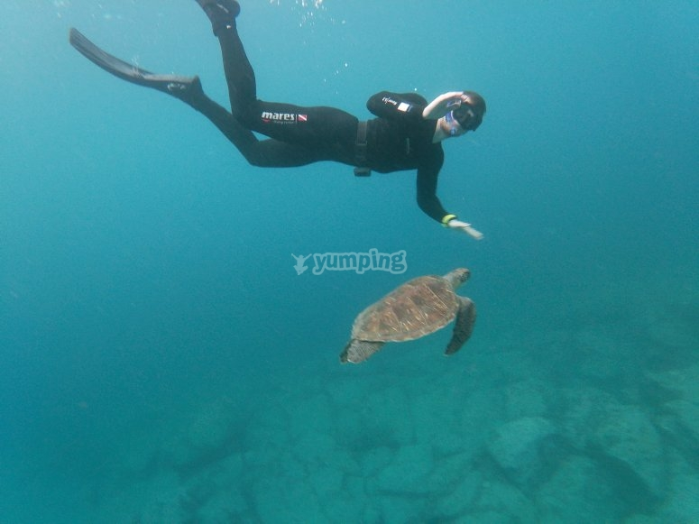 在特内里费岛绿海龟浮潜