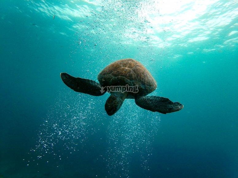 与乌龟面对面特内里费岛的常见绿色
