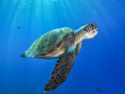Snorkel con tortugas en la Costa Adeje 3h 30 min