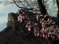 El valle en flor