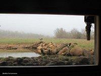 Vista desde el hide
