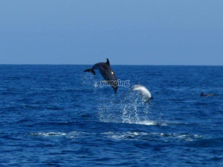 在洪达里比亚居住的鲸类动物