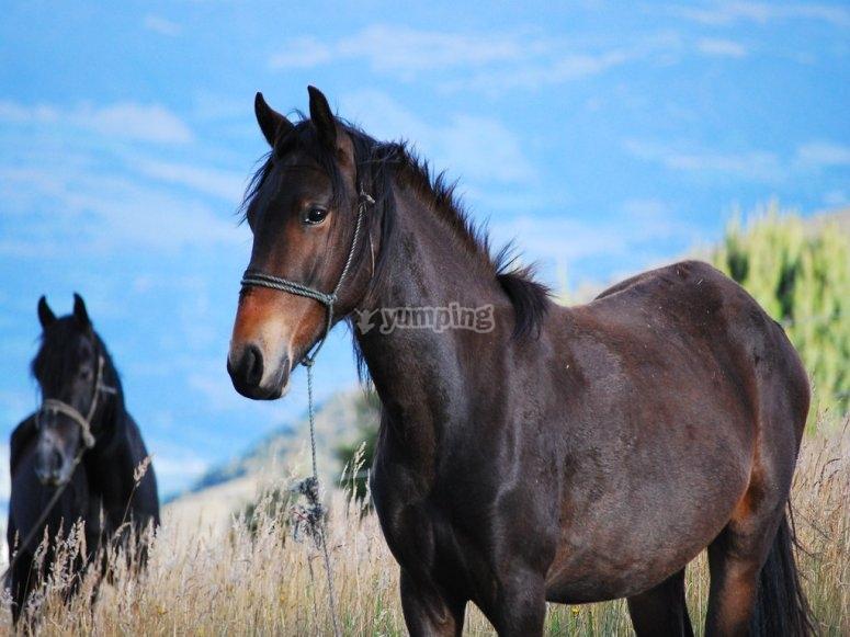 Compartiendo experiencias a caballo en Málaga