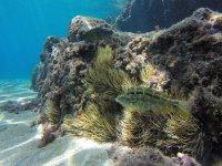 大西洋水下物种