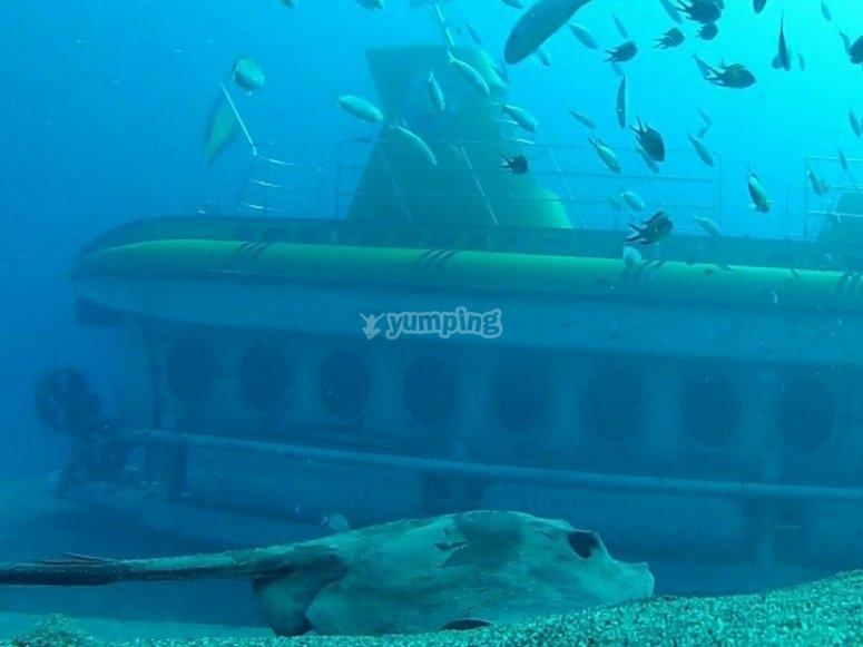 Tour en submarino desde Puerto Calero