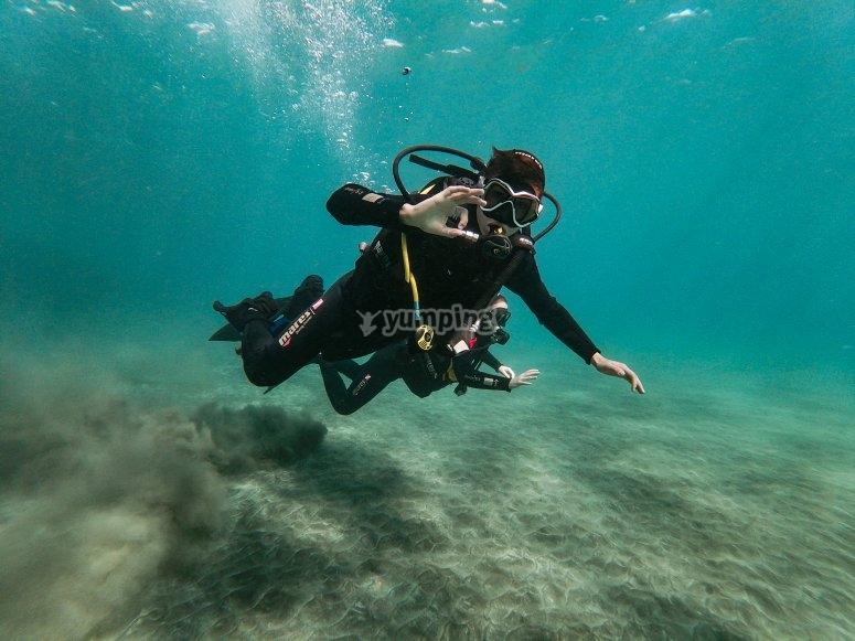 特内里费岛南部的水下动物群