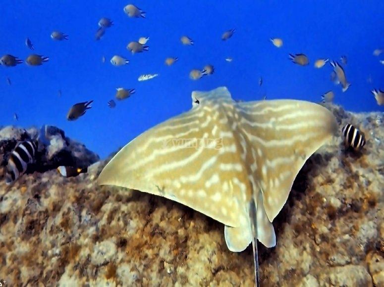 在特内里费岛获得SSI潜水资格