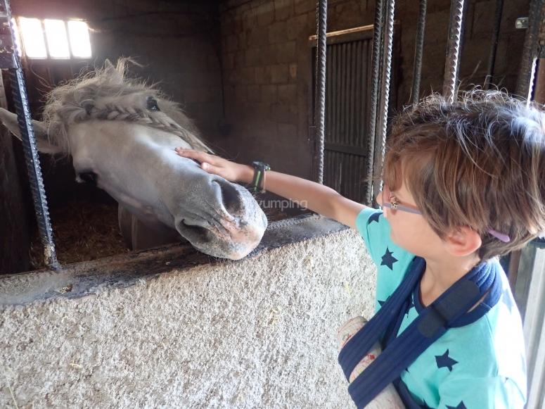Visita a finca con caballos