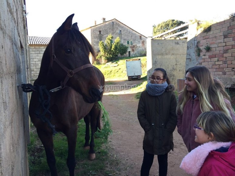 Conociendo a los caballos