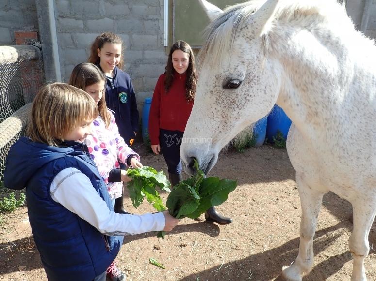 Dando de comer a los caballos