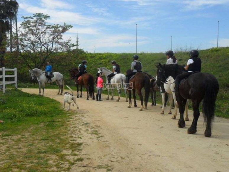 Horse riding lessons in San Juan de Aznalfarache