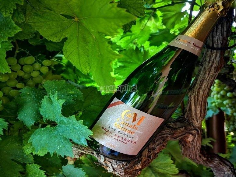 带有卡瓦格兰储备酒的葡萄酒旅游