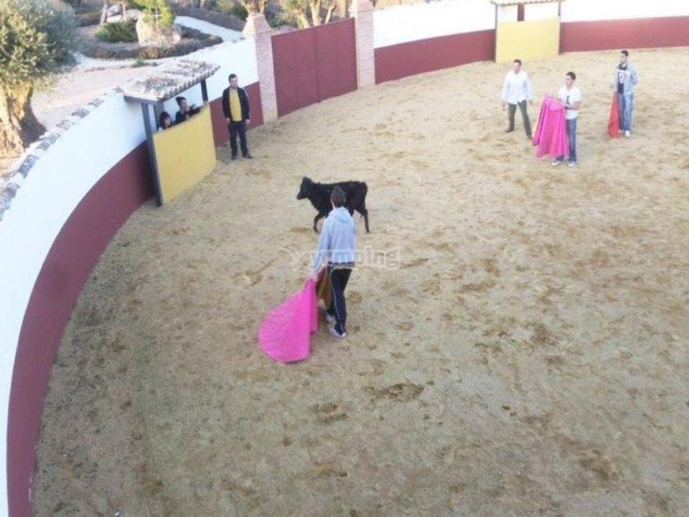 Plaza de toros con suelta de 2 vaquillas