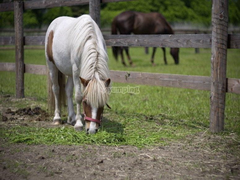 在科尔梅纳尔(Colmenar Viejo)骑小马